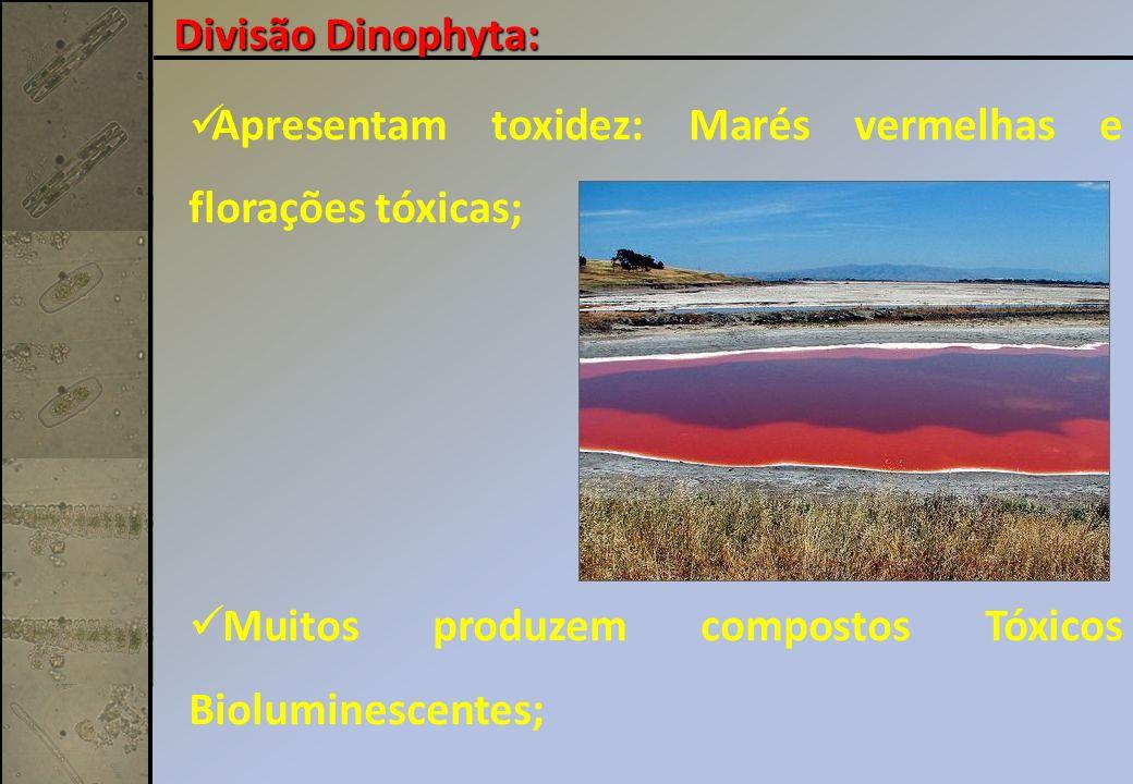 Apresentam toxidez: Marés vermelhas e florações tóxicas; Muitos produzem compostos Tóxicos Bioluminescentes; Divisão Dinophyta:
