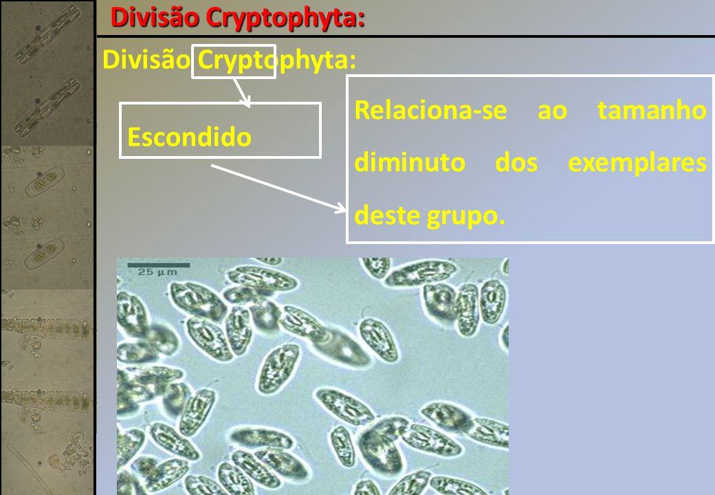 Divisão Cryptophyta: Escondido Relaciona-se ao tamanho diminuto dos exemplares deste grupo.