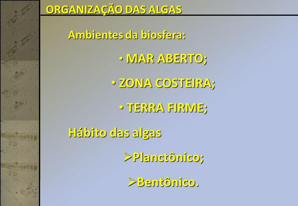 Ambientes da biosfera: MAR ABERTO; MAR ABERTO; ZONA COSTEIRA; ZONA COSTEIRA; TERRA FIRME; TERRA FIRME; Hábito das algas Planctônico; Planctônico; Bentônico.
