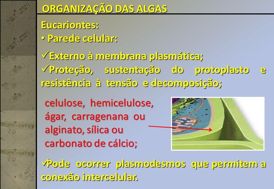 Eucariontes: Parede celular: Parede celular: Externo à membrana plasmática; Externo à membrana plasmática; Proteção, sustentação do protoplasto e resistência à tensão e decomposição; Proteção, sustentação do protoplasto e resistência à tensão e decomposição; Pode ocorrer plasmodesmos que permitem a conexão intercelular.