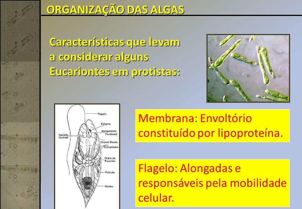 Características que levam a considerar alguns Eucariontes em protistas: Flagelo: Alongadas e responsáveis pela mobilidade celular.