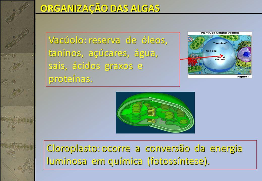 Vacúolo: reserva de óleos, taninos, açúcares, água, sais, ácidos graxos e proteínas.
