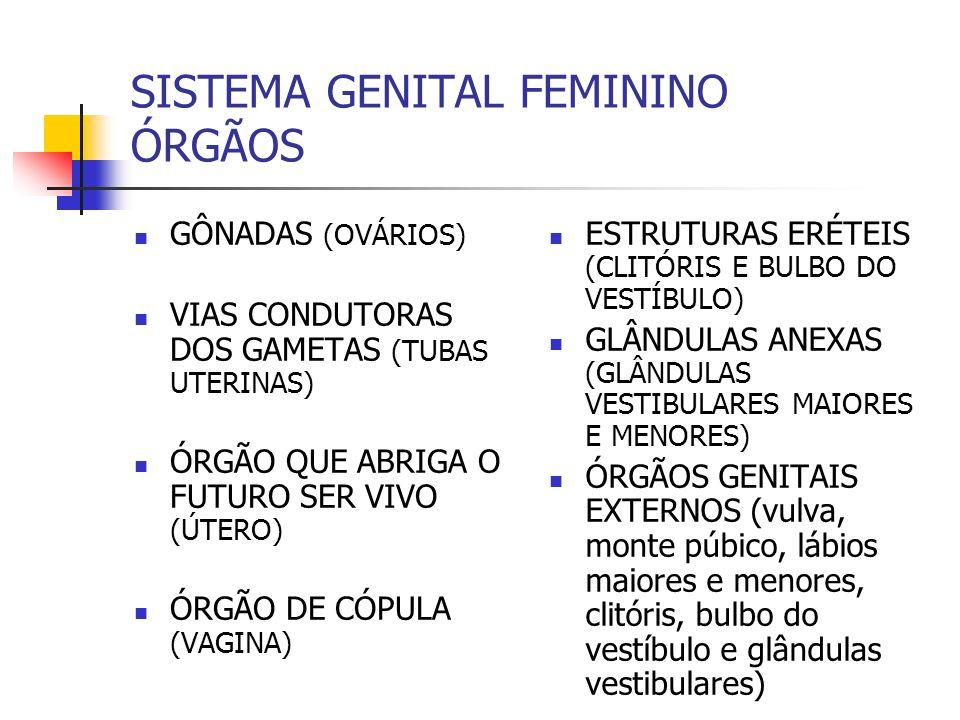 SISTEMA GENITAL FEMININO ÓRGÃOS GÔNADAS (OVÁRIOS) VIAS CONDUTORAS DOS GAMETAS (TUBAS UTERINAS) ÓRGÃO QUE ABRIGA O FUTURO SER VIVO (ÚTERO) ÓRGÃO DE CÓP