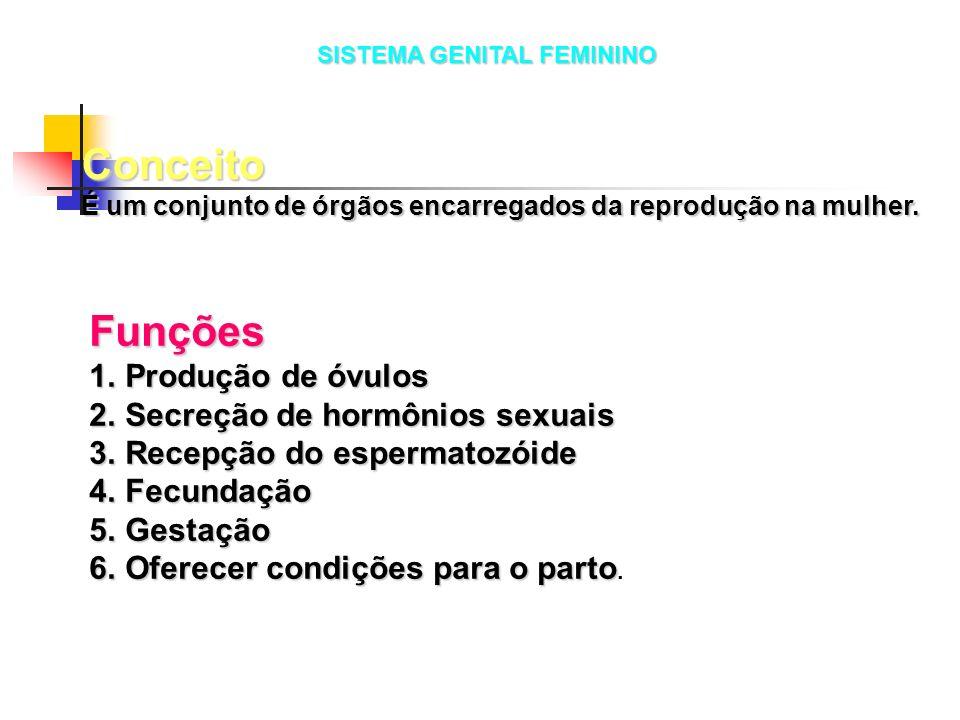 Funções 1.Produção de óvulos 2.Secreção de hormônios sexuais 3.Recepção do espermatozóide 4.Fecundação 5.Gestação 6.Oferecer condições para o parto 6.