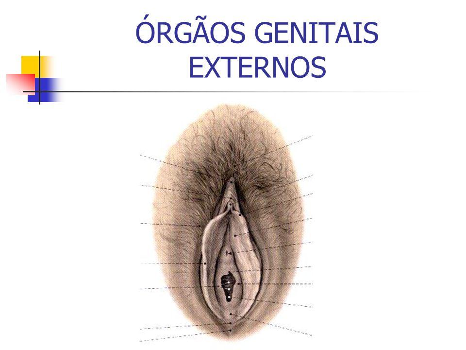 ÓRGÃOS GENITAIS EXTERNOS