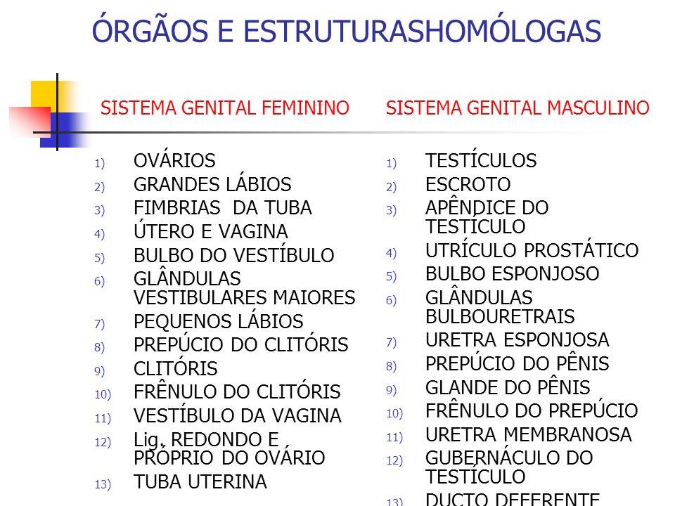 ÓRGÃOS E ESTRUTURASHOMÓLOGAS SISTEMA GENITAL FEMININO SISTEMA GENITAL MASCULINO 1) OVÁRIOS 2) GRANDES LÁBIOS 3) FIMBRIAS DA TUBA 4) ÚTERO E VAGINA 5)