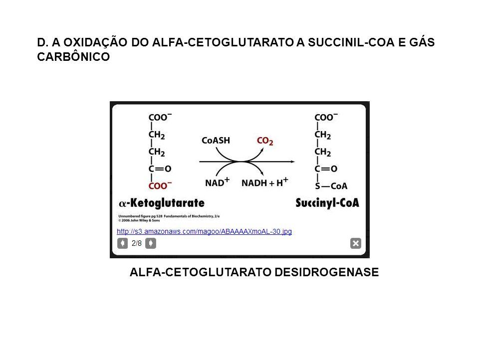 D. A OXIDAÇÃO DO ALFA-CETOGLUTARATO A SUCCINIL-COA E GÁS CARBÔNICO ALFA-CETOGLUTARATO DESIDROGENASE
