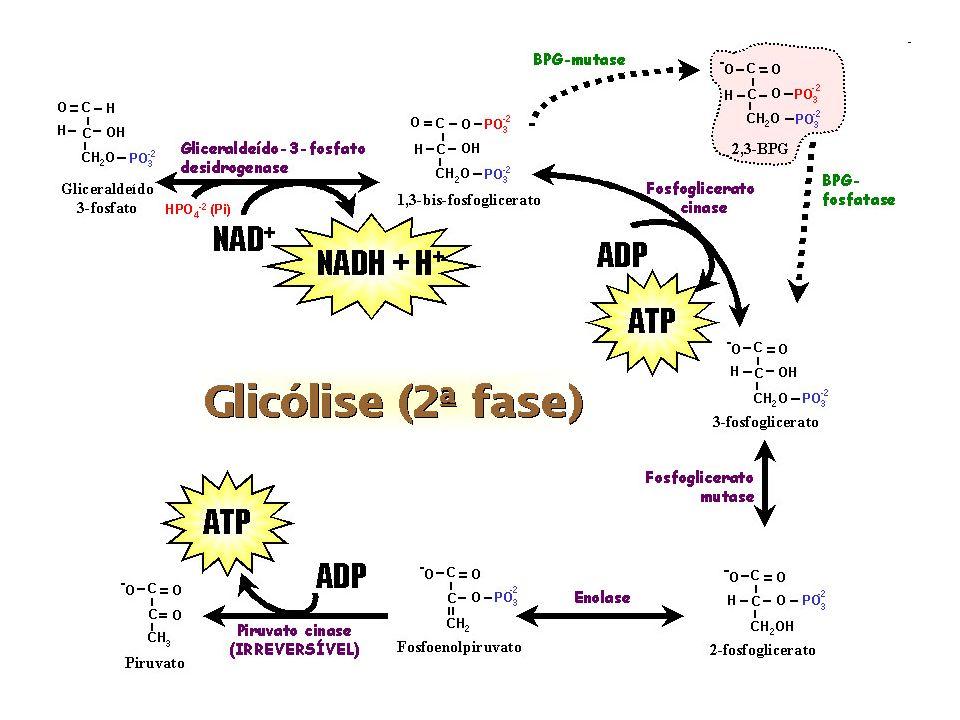 Glicose anaeróbica