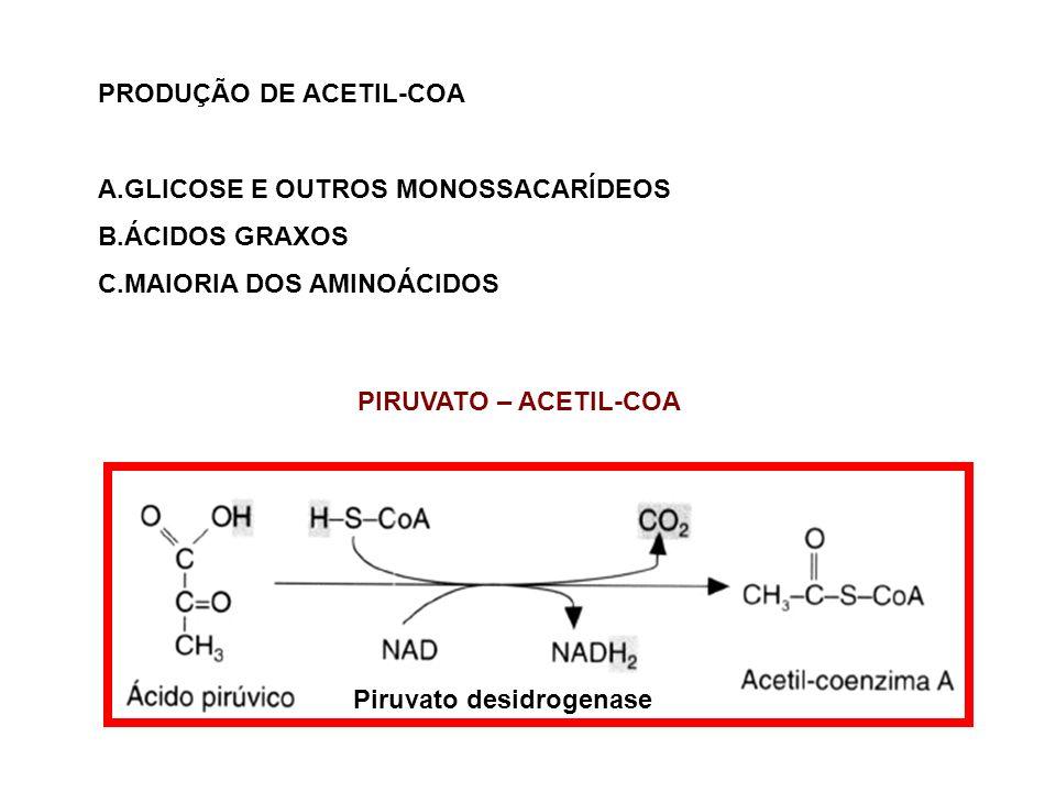PRODUÇÃO DE ACETIL-COA A.GLICOSE E OUTROS MONOSSACARÍDEOS B.ÁCIDOS GRAXOS C.MAIORIA DOS AMINOÁCIDOS PIRUVATO – ACETIL-COA Piruvato desidrogenase