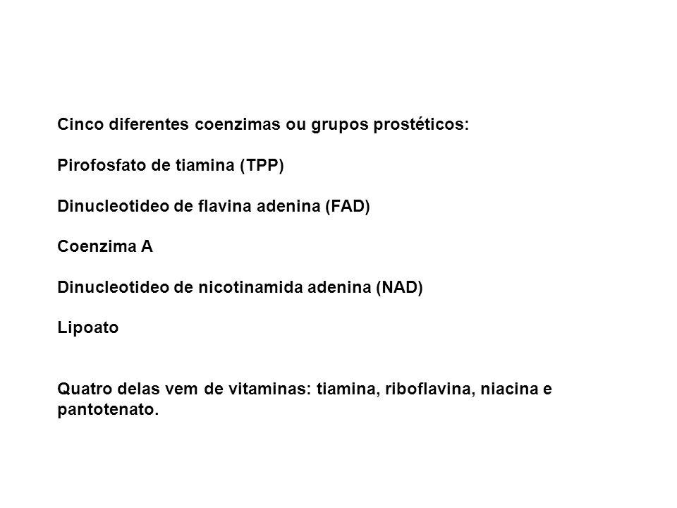 Cinco diferentes coenzimas ou grupos prostéticos: Pirofosfato de tiamina (TPP) Dinucleotideo de flavina adenina (FAD) Coenzima A Dinucleotideo de nico