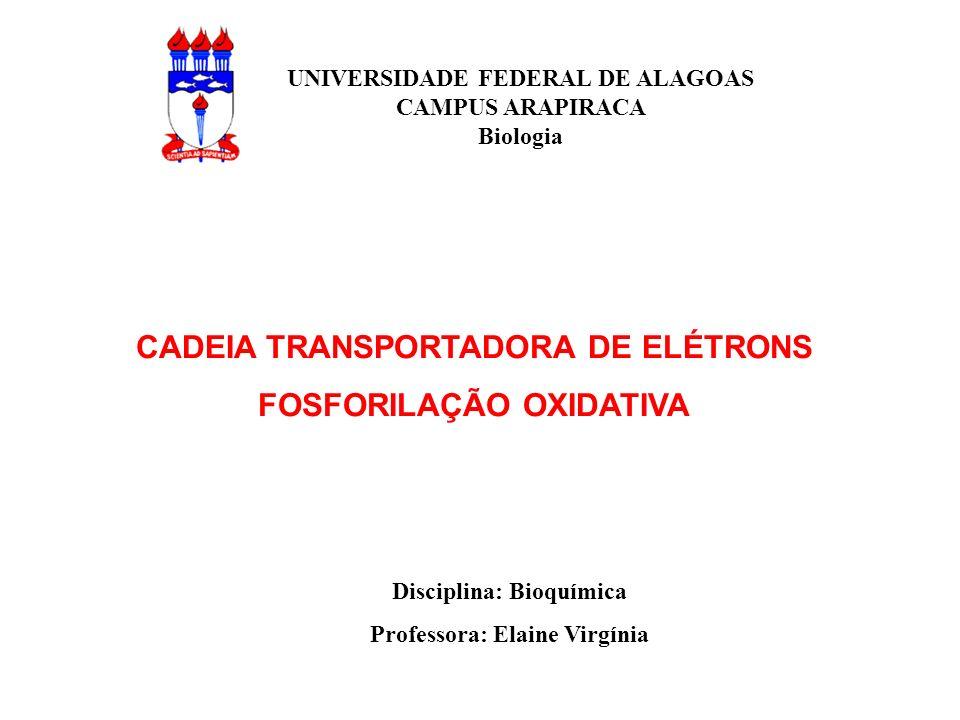 CADEIA TRANSPORTADORA DE ELÉTRONS FOSFORILAÇÃO OXIDATIVA UNIVERSIDADE FEDERAL DE ALAGOAS CAMPUS ARAPIRACA Biologia Disciplina: Bioquímica Professora: Elaine Virgínia