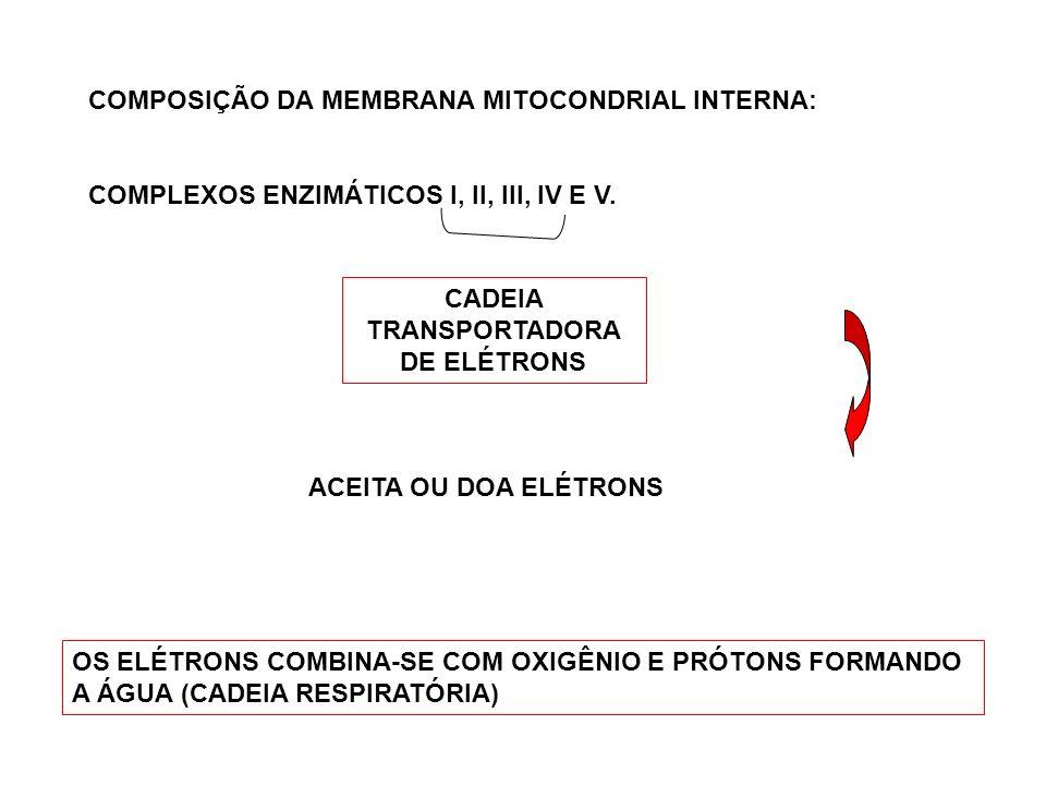 COMPOSIÇÃO DA MEMBRANA MITOCONDRIAL INTERNA: COMPLEXOS ENZIMÁTICOS I, II, III, IV E V. CADEIA TRANSPORTADORA DE ELÉTRONS ACEITA OU DOA ELÉTRONS OS ELÉ