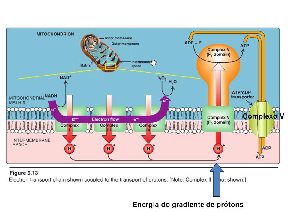 Energia do gradiente de prótons Complexo V