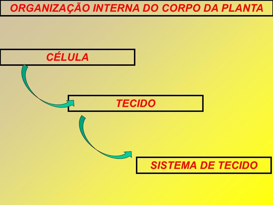 ORGANIZAÇÃO INTERNA DO CORPO DA PLANTA CÉLULA TECIDO SISTEMA DE TECIDO