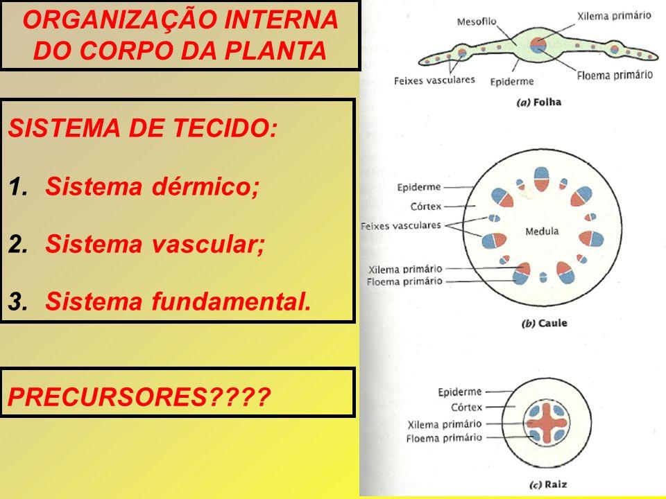ORGANIZAÇÃO INTERNA DO CORPO DA PLANTA SISTEMA DE TECIDO: 1.Sistema dérmico; 2.Sistema vascular; 3.Sistema fundamental. PRECURSORES????
