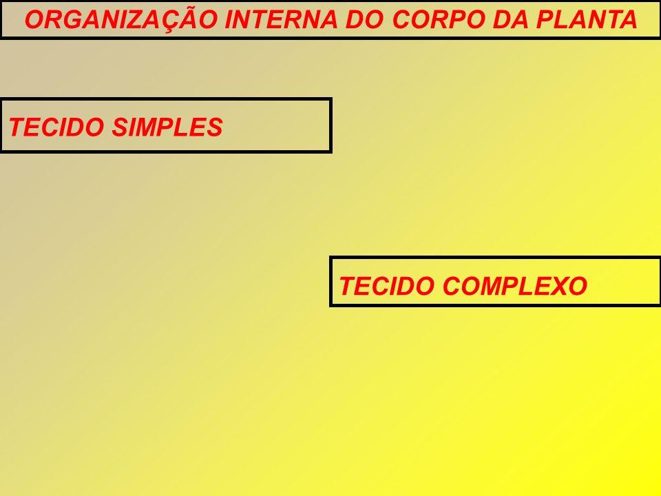 ORGANIZAÇÃO INTERNA DO CORPO DA PLANTA TECIDO SIMPLES TECIDO COMPLEXO