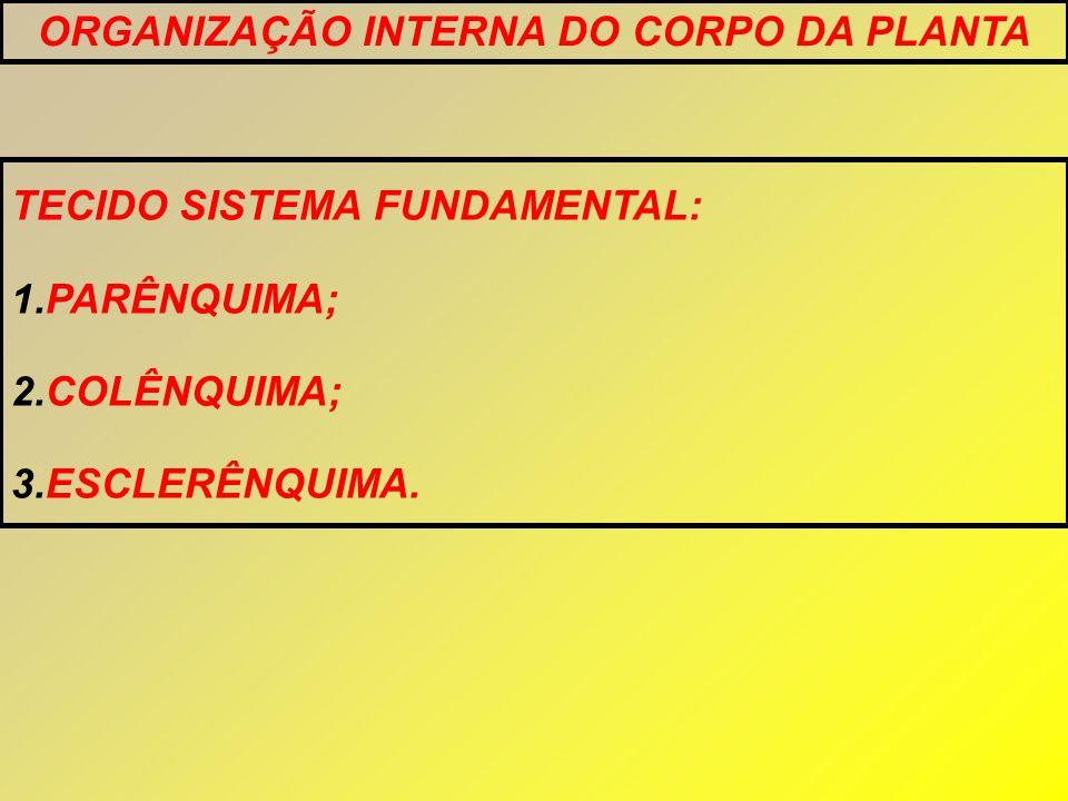 TECIDO SISTEMA FUNDAMENTAL: 1.PARÊNQUIMA; 2.COLÊNQUIMA; 3.ESCLERÊNQUIMA. ORGANIZAÇÃO INTERNA DO CORPO DA PLANTA