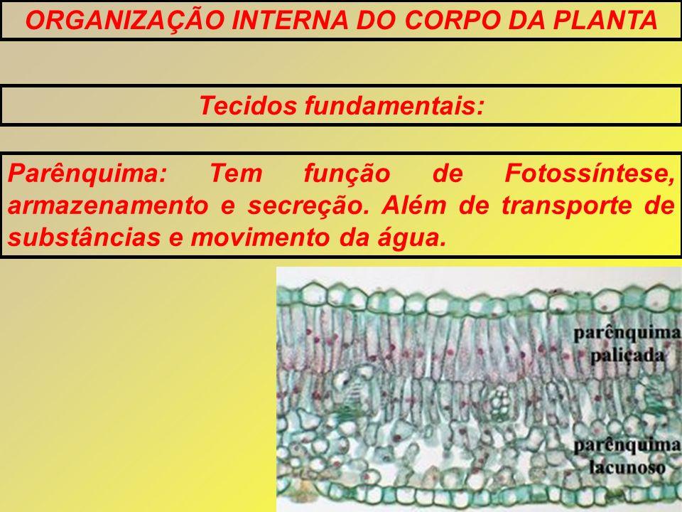 Tecidos fundamentais: Parênquima: Tem função de Fotossíntese, armazenamento e secreção. Além de transporte de substâncias e movimento da água.