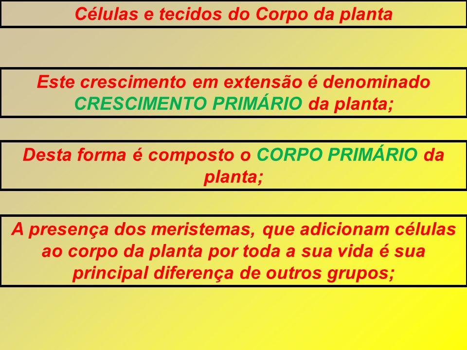 Células e tecidos do Corpo da planta Este crescimento em extensão é denominado CRESCIMENTO PRIMÁRIO da planta; Desta forma é composto o CORPO PRIMÁRIO
