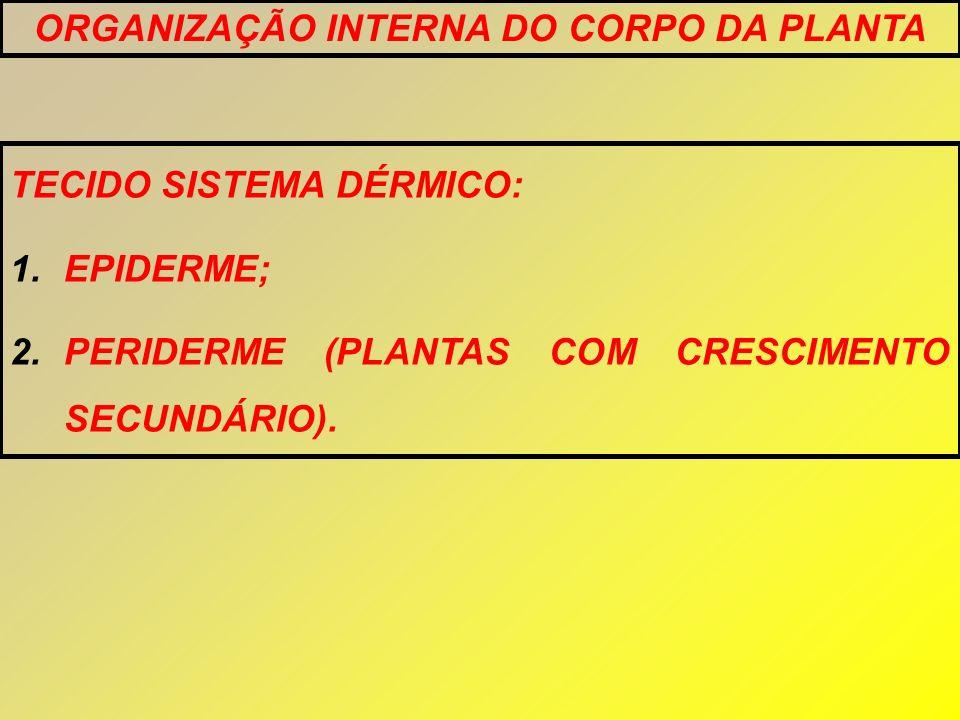 TECIDO SISTEMA DÉRMICO: 1.EPIDERME; 2.PERIDERME (PLANTAS COM CRESCIMENTO SECUNDÁRIO). ORGANIZAÇÃO INTERNA DO CORPO DA PLANTA
