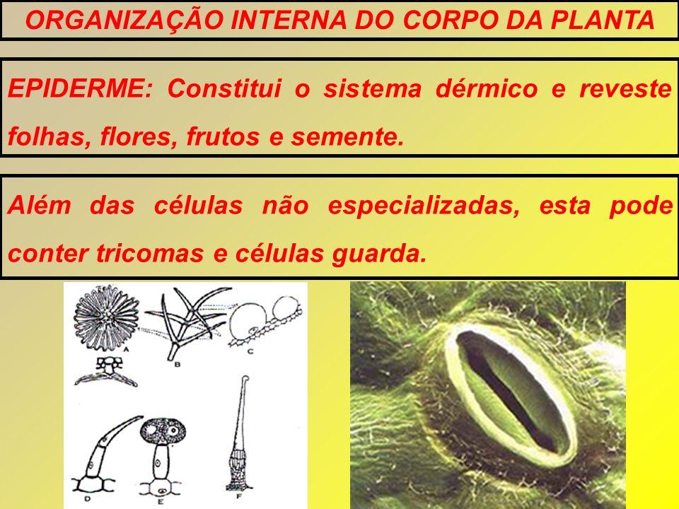 EPIDERME: Constitui o sistema dérmico e reveste folhas, flores, frutos e semente. Além das células não especializadas, esta pode conter tricomas e cél