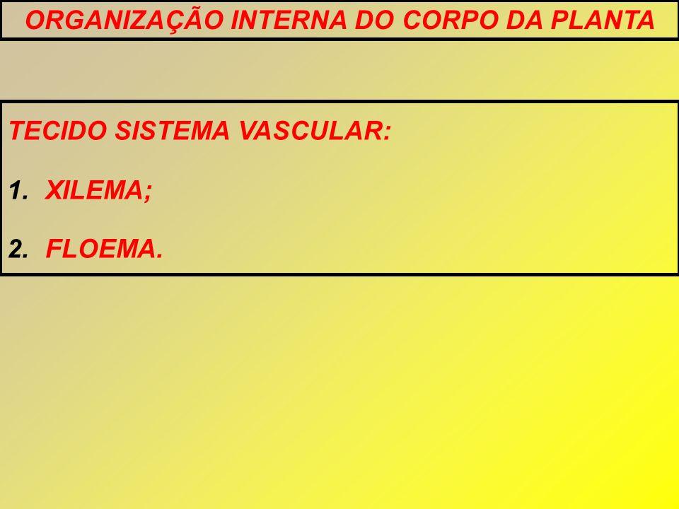 TECIDO SISTEMA VASCULAR: 1.XILEMA; 2.FLOEMA. ORGANIZAÇÃO INTERNA DO CORPO DA PLANTA