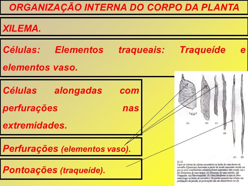 XILEMA. ORGANIZAÇÃO INTERNA DO CORPO DA PLANTA Células: Elementos traqueais: Traqueíde e elementos vaso. Células alongadas com perfurações nas extremi