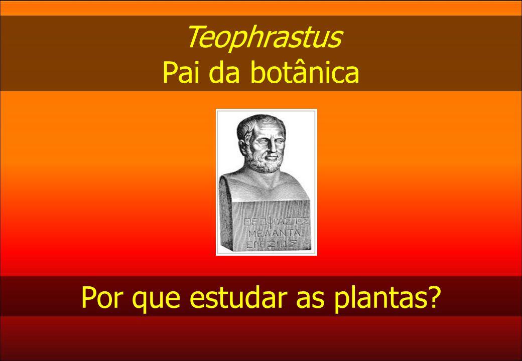 Teophrastus Pai da botânica Por que estudar as plantas?