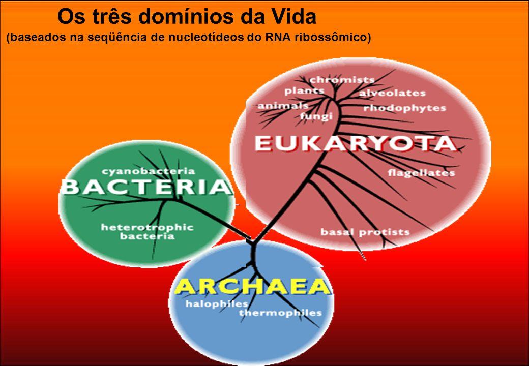 Os três domínios da Vida (baseados na seqüência de nucleotídeos do RNA ribossômico)
