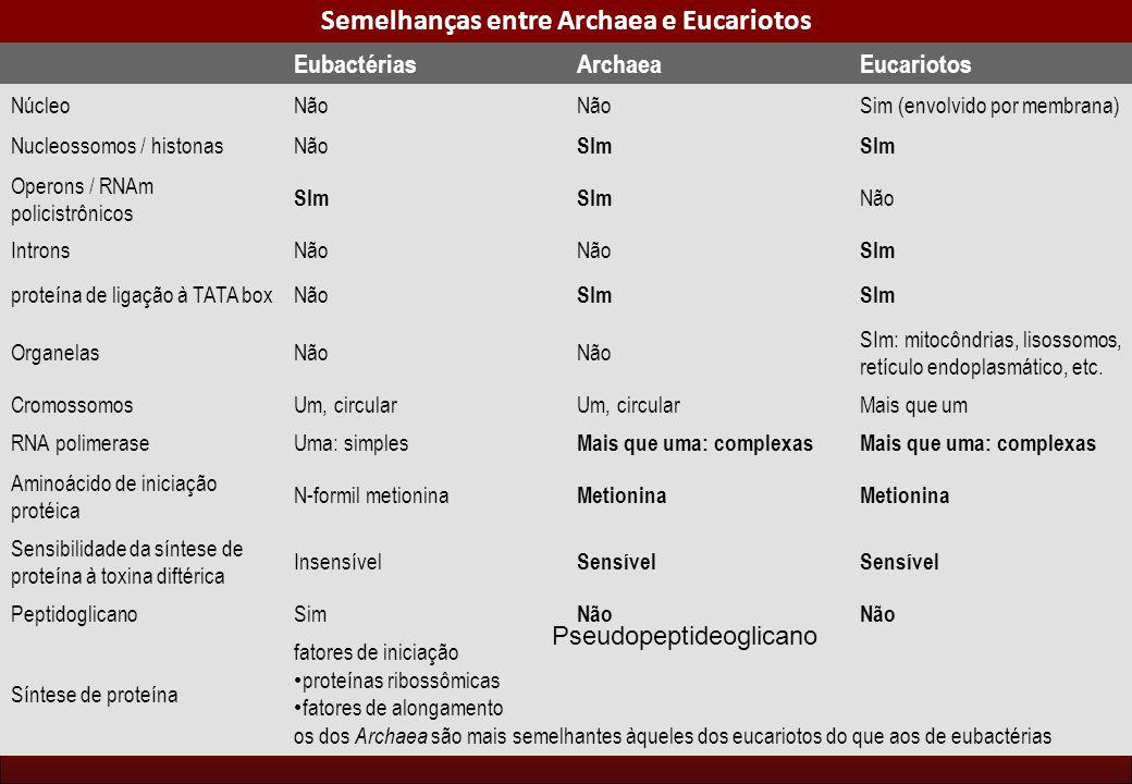 Semelhanças entre Archaea e Eucariotos EubactériasArchaeaEucariotos NúcleoNão Sim (envolvido por membrana) Nucleossomos / histonasNão SIm Operons / RN