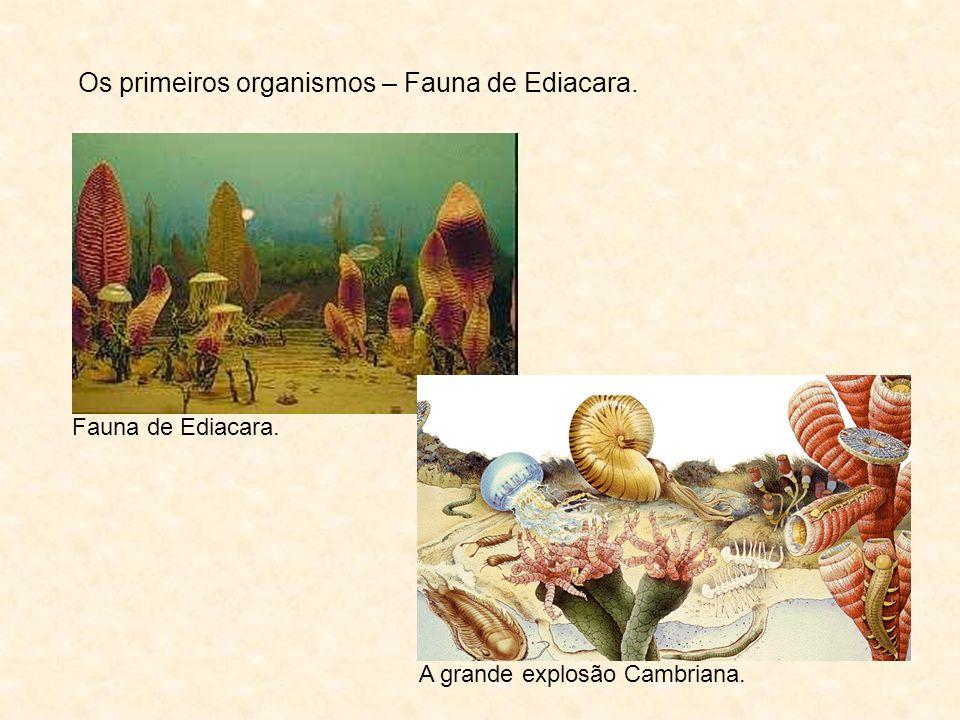 Os primeiros organismos – Fauna de Ediacara. A grande explosão Cambriana. Fauna de Ediacara.