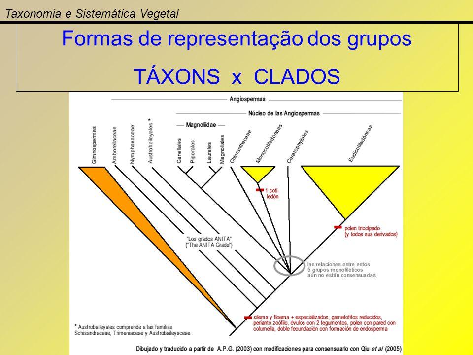 Taxonomia e Sistemática Vegetal Formas de representação dos grupos TÁXONS x CLADOS