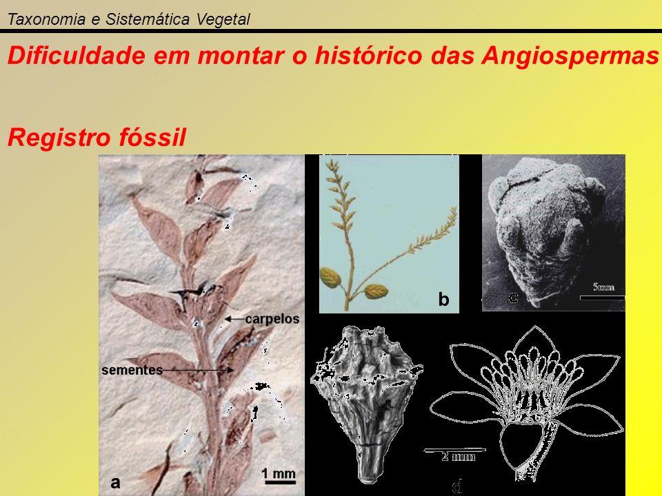 Taxonomia e Sistemática Vegetal Dificuldade em montar o histórico das Angiospermas Registro fóssil