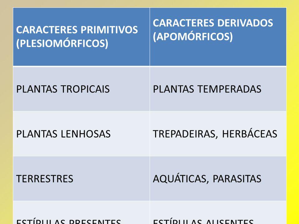 CARACTERES PRIMITIVOS (PLESIOMÓRFICOS) CARACTERES DERIVADOS (APOMÓRFICOS) PLANTAS TROPICAISPLANTAS TEMPERADAS PLANTAS LENHOSASTREPADEIRAS, HERBÁCEAS T