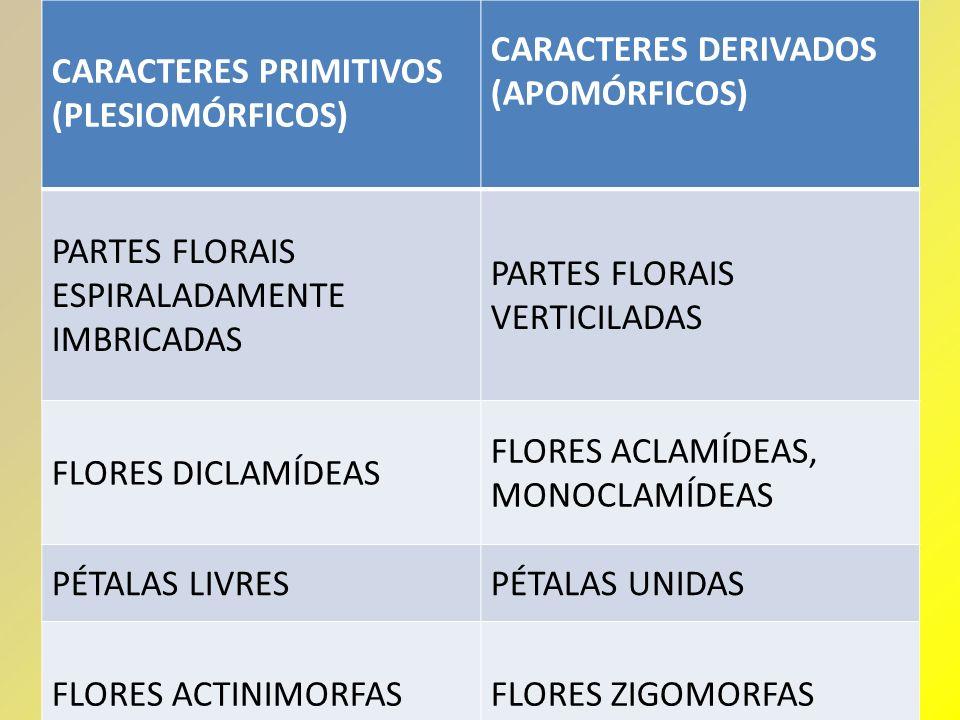 CARACTERES PRIMITIVOS (PLESIOMÓRFICOS) CARACTERES DERIVADOS (APOMÓRFICOS) PARTES FLORAIS ESPIRALADAMENTE IMBRICADAS PARTES FLORAIS VERTICILADAS FLORES