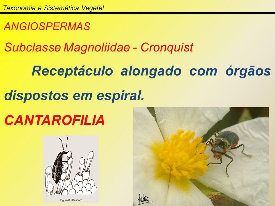 Taxonomia e Sistemática Vegetal ANGIOSPERMAS Subclasse Magnoliidae - Cronquist Receptáculo alongado com órgãos dispostos em espiral. CANTAROFILIA