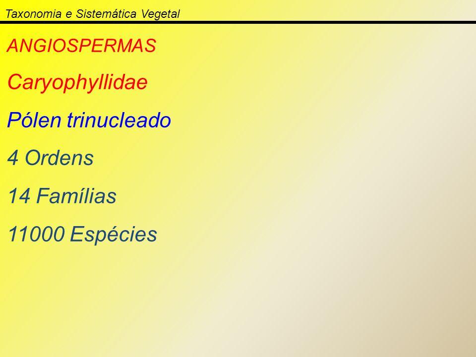 Taxonomia e Sistemática Vegetal ANGIOSPERMAS Caryophyllidae Pólen trinucleado 4 Ordens 14 Famílias 11000 Espécies