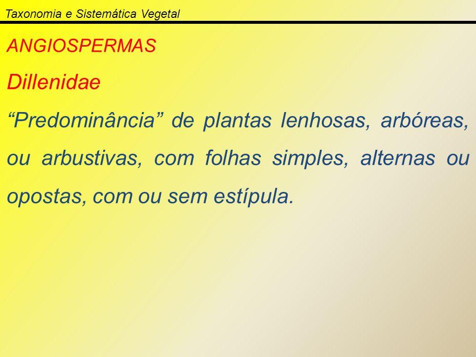 Taxonomia e Sistemática Vegetal ANGIOSPERMAS Dillenidae Predominância de plantas lenhosas, arbóreas, ou arbustivas, com folhas simples, alternas ou op