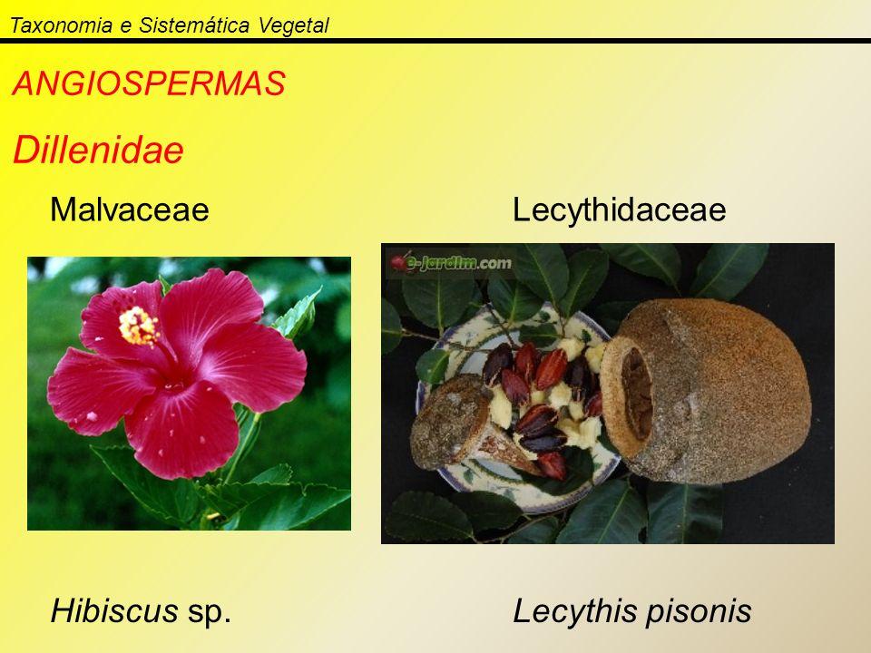 Taxonomia e Sistemática Vegetal ANGIOSPERMAS Dillenidae Malvaceae Hibiscus sp. Lecythidaceae Lecythis pisonis