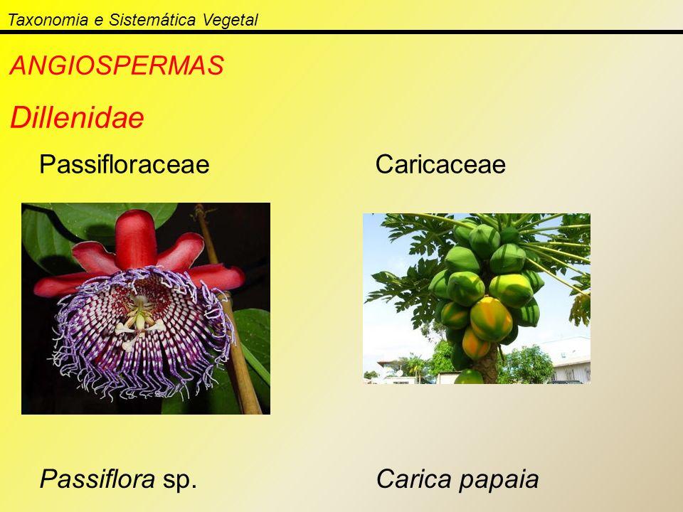 Taxonomia e Sistemática Vegetal ANGIOSPERMAS Dillenidae Passifloraceae Passiflora sp. Caricaceae Carica papaia