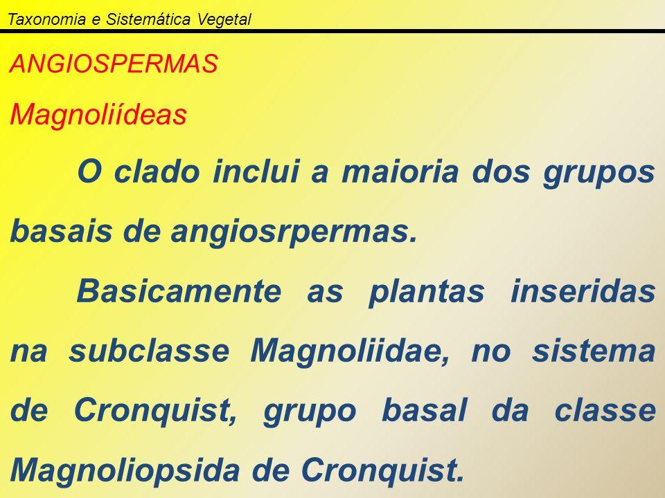 Taxonomia e Sistemática Vegetal ANGIOSPERMAS Magnoliídeas O clado inclui a maioria dos grupos basais de angiosrpermas. Basicamente as plantas inserida