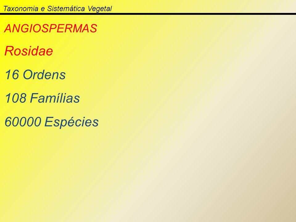 Taxonomia e Sistemática Vegetal ANGIOSPERMAS Rosidae 16 Ordens 108 Famílias 60000 Espécies