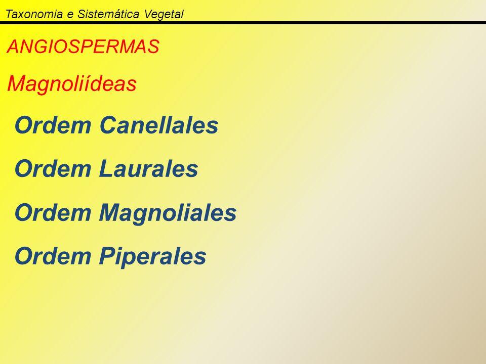 Taxonomia e Sistemática Vegetal ANGIOSPERMAS Magnoliídeas