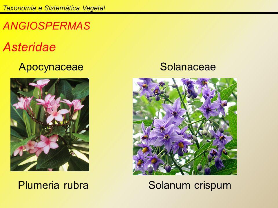 Taxonomia e Sistemática Vegetal ANGIOSPERMAS Asteridae Apocynaceae Plumeria rubra Solanaceae Solanum crispum