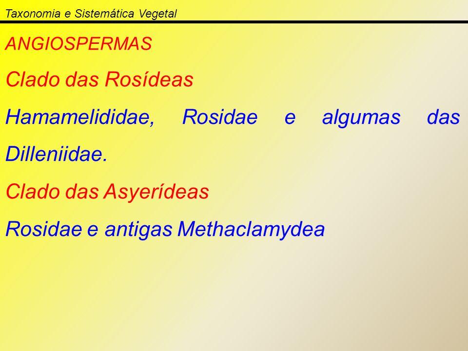 Taxonomia e Sistemática Vegetal ANGIOSPERMAS Clado das Rosídeas Hamamelididae, Rosidae e algumas das Dilleniidae. Clado das Asyerídeas Rosidae e antig