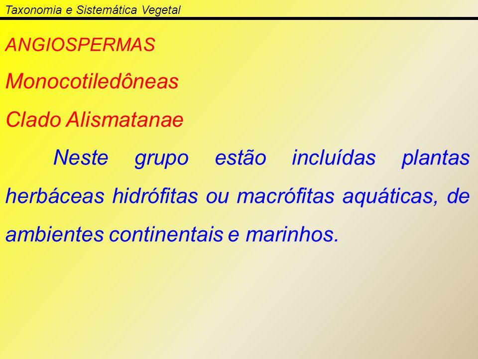 Taxonomia e Sistemática Vegetal ANGIOSPERMAS Monocotiledôneas Clado Alismatanae Neste grupo estão incluídas plantas herbáceas hidrófitas ou macrófitas