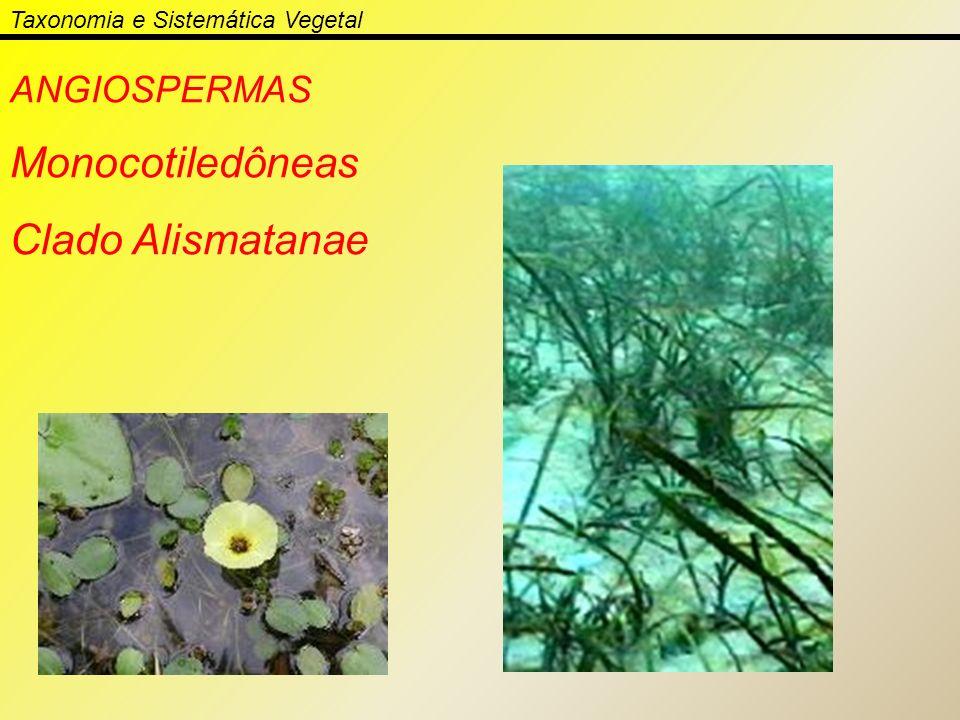 Taxonomia e Sistemática Vegetal ANGIOSPERMAS Monocotiledôneas Clado Alismatanae