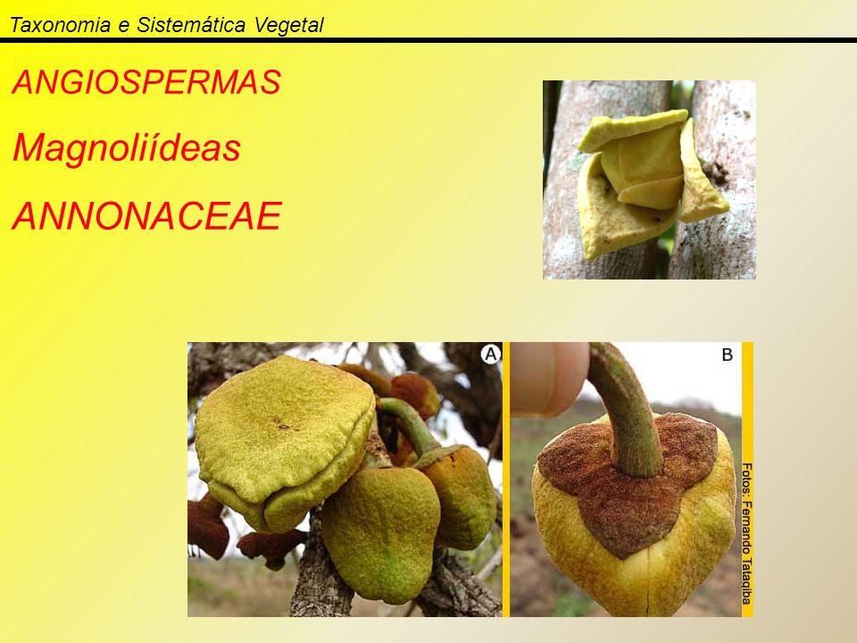Taxonomia e Sistemática Vegetal ANGIOSPERMAS Magnoliídeas ANNONACEAE