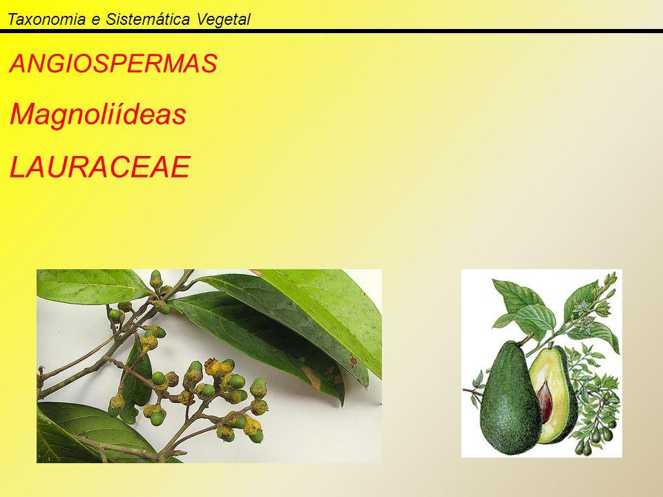 Taxonomia e Sistemática Vegetal ANGIOSPERMAS Magnoliídeas LAURACEAE