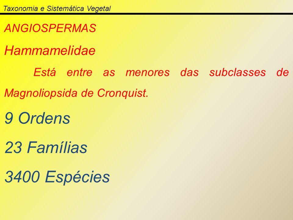 Taxonomia e Sistemática Vegetal ANGIOSPERMAS Hammamelidae Está entre as menores das subclasses de Magnoliopsida de Cronquist. 9 Ordens 23 Famílias 340